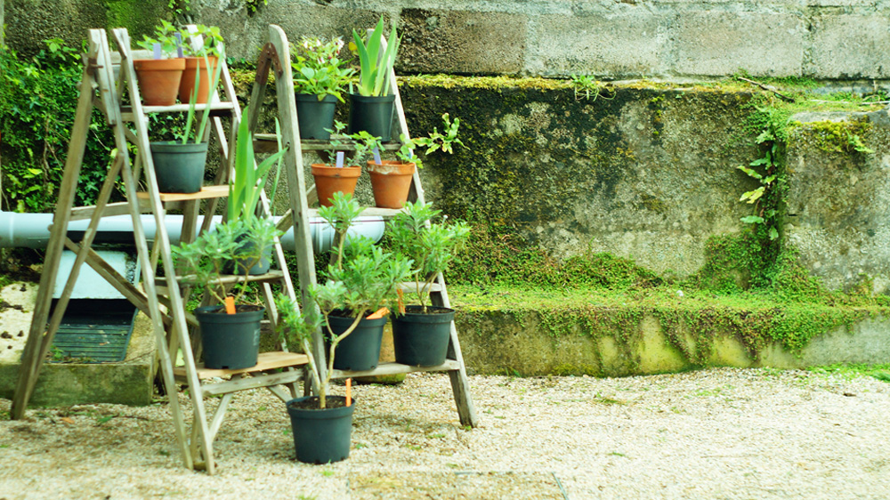 Plants for sale at Potager Garden Cafe in Constantine, Cornwall