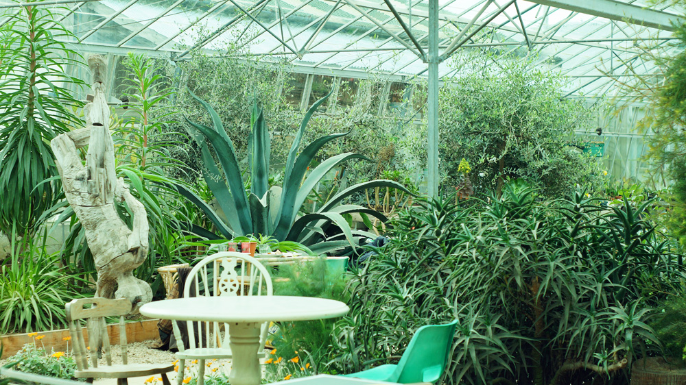 Old greenhouse at the Potager Garden Cafe in Constantine, Cornwall