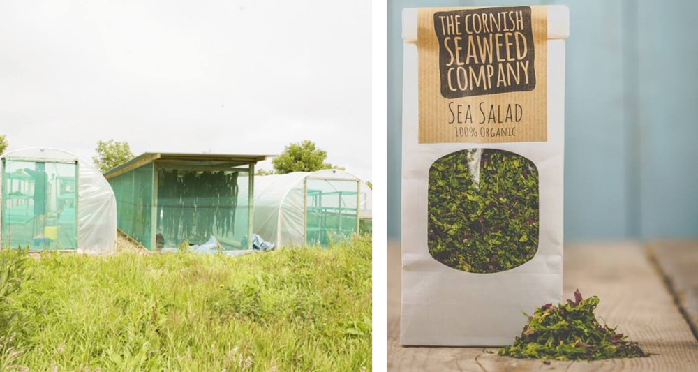Cornish seaweed company sea salad