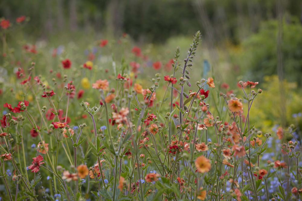 'How to grow a cutting garden', The Garden Gate Flower Company, Cornwall